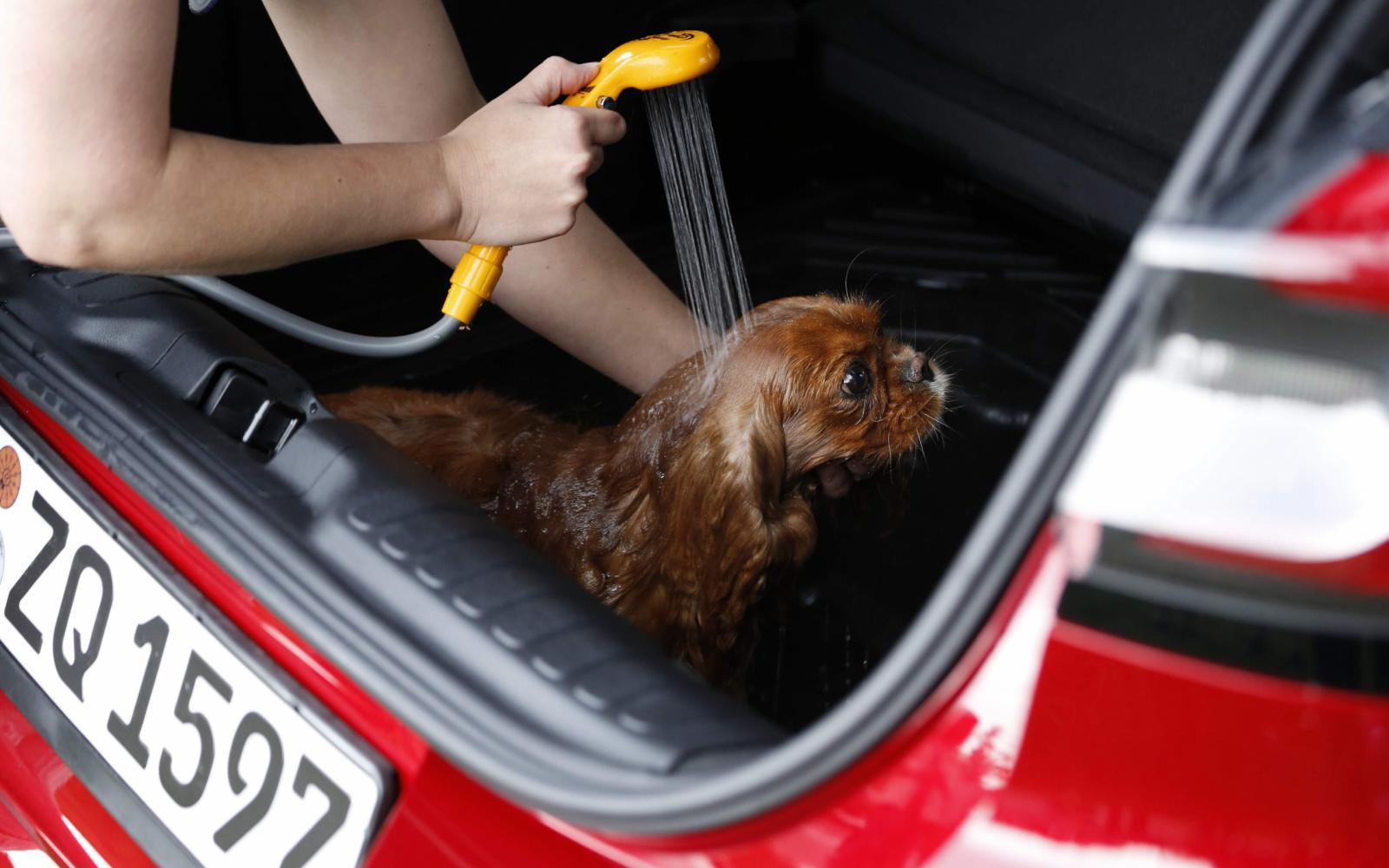 Fikkie gaat gewassen en gestreken achter in de Ford Puma