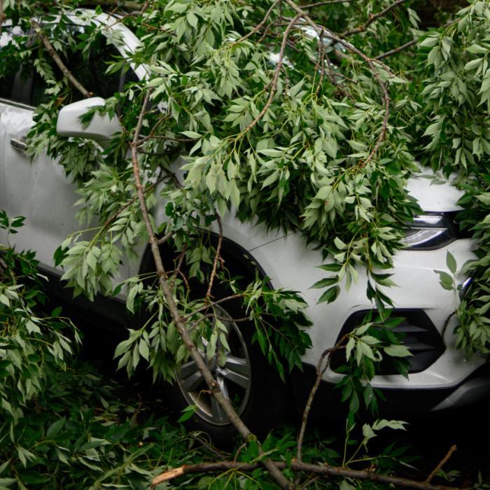 Storm Francis blaast een boom op je auto! En nu?